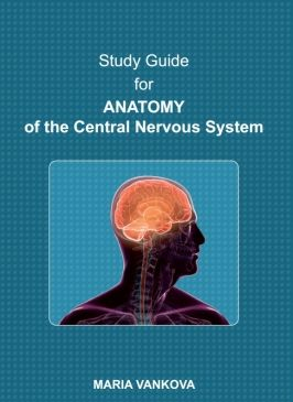 Study Guide for Anatomy of the Central Nervous System
