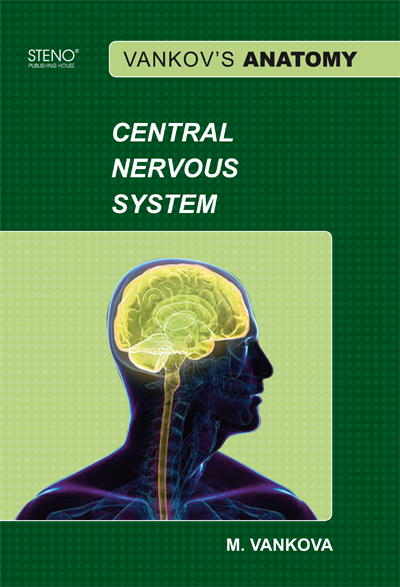 Vankov U0026 39 S Anatomy - Central Nervous System