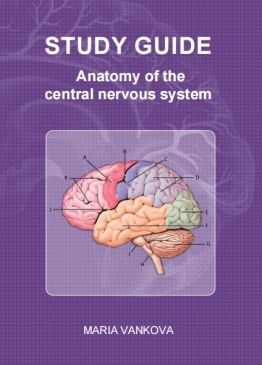 Anatomy of the Central Nervous System - Study Guide